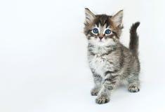 Gatito bonito Foto de archivo