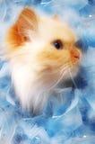 Gatito bonito Imagen de archivo libre de regalías