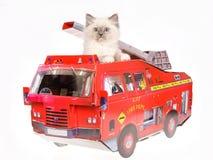 Gatito bonito de Ragdoll en coche de bomberos rojo Foto de archivo libre de regalías