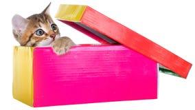 Gatito brindled de Shorthair ocultado en un aislante hermoso de la caja de regalo foto de archivo