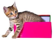 Gatito brindled de Shorthair ocultado en una caja de regalo hermosa foto de archivo libre de regalías