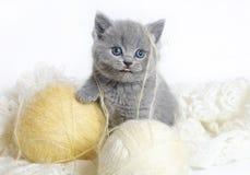 Gatito británico con las bolas de lanas. Foto de archivo