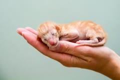 Gatito cabido todo en la palma de su mano Imagenes de archivo