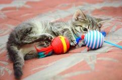 Gatito casero lindo que juega con los juguetes foto de archivo libre de regalías