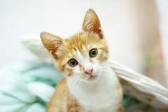 Gatito cat Fotografía de archivo