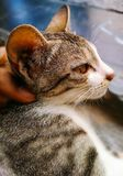 Gatito cat Imagenes de archivo