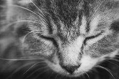 Gatito cat Foto de archivo