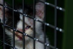 gatito con conjuntivitis fotos de archivo libres de regalías