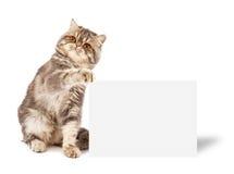 Gatito con el cartel Imagen de archivo