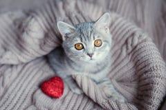 Gatito con el corazón adentro el día de tarjeta del día de San Valentín Fotografía de archivo libre de regalías