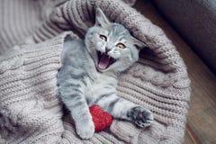 Gatito con el corazón adentro el día de tarjeta del día de San Valentín Foto de archivo libre de regalías
