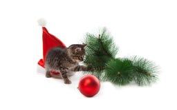 Gatito con el sombrero de Papá Noel, rama del abeto y bola del Año Nuevo Imagenes de archivo