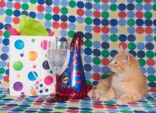 Gatito con el sombrero y el champán del partido Imagenes de archivo