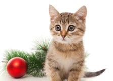 Gatito con la bola roja y ramita del abeto Fotos de archivo libres de regalías