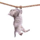 Gatito con la cuerda Foto de archivo libre de regalías