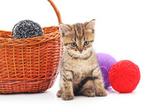 Gatito con las bolas del hilado Imagen de archivo