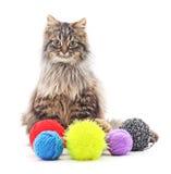 Gatito con las bolas del hilado Fotografía de archivo libre de regalías