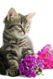 Gatito con las flores Fotos de archivo libres de regalías