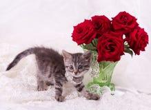 gatito con las rosas rojas fotos de archivo