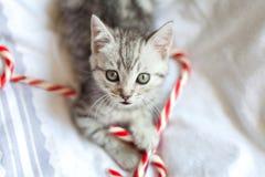 Gatito con los bastones de caramelo de la Navidad Fotos de archivo libres de regalías