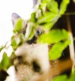 Gatito con los ojos abiertos ocultado detrás de la planta Imagen de archivo libre de regalías