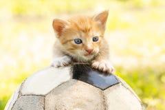 Gatito con un balón de fútbol imagen de archivo libre de regalías