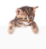 Gatito con un espacio en blanco Imagenes de archivo
