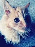 Gatito confuso foto de archivo