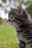 Gatito curioso Foto de archivo libre de regalías