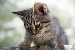 Gatito curioso Fotos de archivo