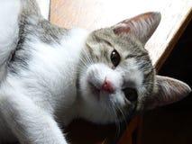 Gatito curioso Imagen de archivo