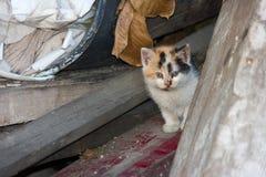 Gatito curioso del jengibre Fotos de archivo