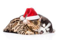 Gatito de Bengala en sue?o del sombrero de santa con el perrito del husky siberiano Aislado en el fondo blanco imagen de archivo