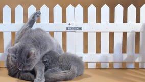 Gatito de británicos Shorthair y gato de la madre cerca de una cerca metrajes