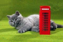 Gatito de británicos Shorthair y una cabina de teléfono imagen de archivo libre de regalías