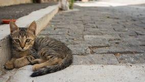 Gatito de la calle imagen de archivo