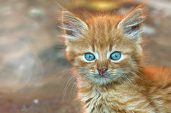 Gatito de la mirada del gatito del gatito del jengibre pequeño Imagen de archivo libre de regalías