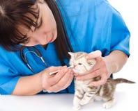Gatito de la nariz de la limpieza en una clínica veterinaria Aislado Foto de archivo libre de regalías