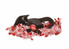 Gatito de la Navidad Imagen de archivo