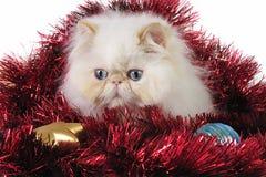 Gatito de la Navidad Imagen de archivo libre de regalías