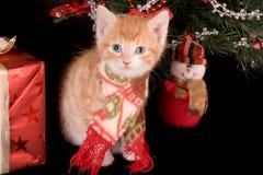 Gatito de la Navidad fotografía de archivo libre de regalías