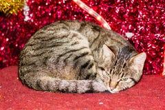 Gatito de la Navidad con la decoración roja de la luz de la Navidad Foto de archivo