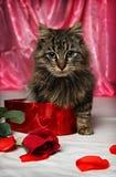 Gatito de la tarjeta del día de San Valentín Imágenes de archivo libres de regalías