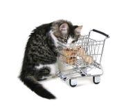 Gatito de las compras Fotos de archivo libres de regalías