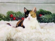 Gatito de las imágenes del día de fiesta del gato foto de archivo libre de regalías