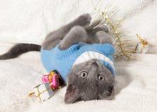 Gatito de mentira con el regalo de la Navidad Imagen de archivo libre de regalías