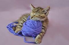 Gatito de mentira lindo con la bola de lanas Imágenes de archivo libres de regalías
