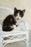Gatito de mimbre Fotografía de archivo libre de regalías