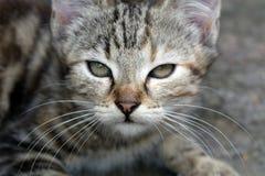 Gatito de Mourao imagen de archivo libre de regalías