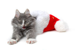 Gatito de Navidad Fotografía de archivo